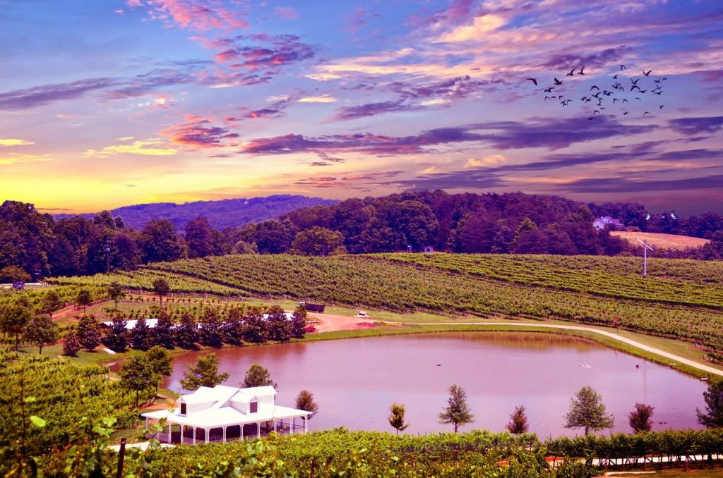 wine-county
